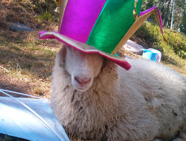 sheep dressed for a party